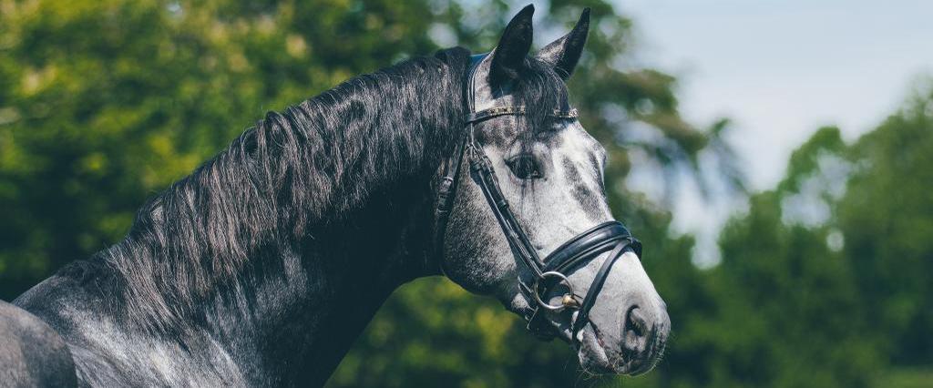 Nova Equestrian