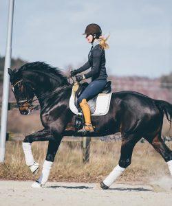 Nova Equestrian Dressage Horse Sale Don Diamant 10