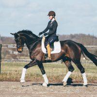 Nova Equestrian Dressage Horse Sale Don Diamant 2