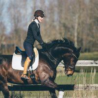 Nova Equestrian Dressage Horse Sale Don Diamant 3