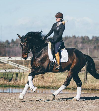 Nova Equestrian Dressage Horse Sale Don Diamant 4