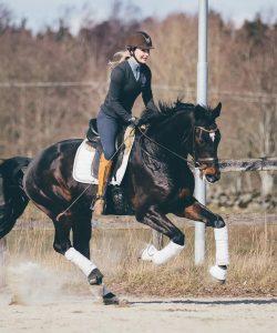 Nova Equestrian Dressage Horse Sale Don Diamant 8