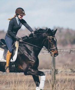 Nova Equestrian Dressage Horse Sale Don Diamant 9