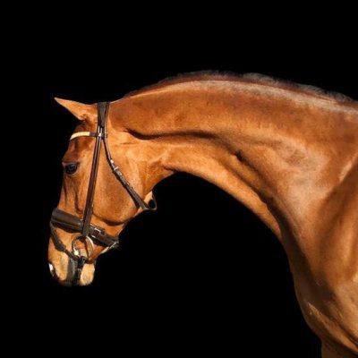 Nova-Equestrian-Dressage-Horse-Sale-Karoles_01_sq