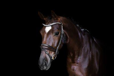 Nova Equestrian Dressage Horse Sale Samsara 2