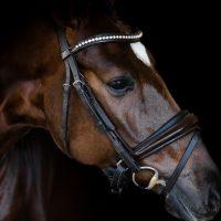 Nova Equestrian Dressage Horse Sale Samsara 3