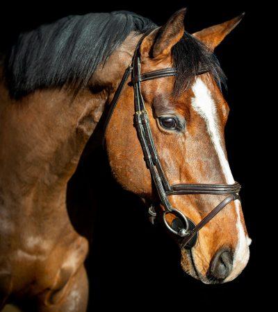 Nova Equestrian Jumping Horse Sale Casco 3