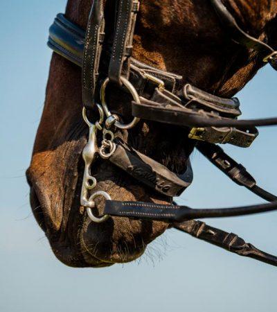 Nova-Equestrian-Summer2020-22