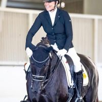 Nova_Dressage_Horse_Forsale_Lightfeet_06