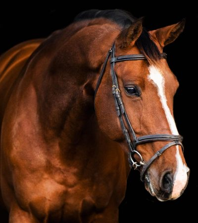 Nova_Equestrian_Casco_showjumping_forsale_head