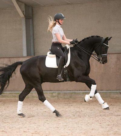 nova equestrian 2