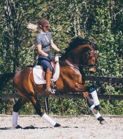 nova equestrian 4